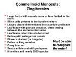 commelinoid monocots zingiberales