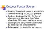 outdoor fungal spores