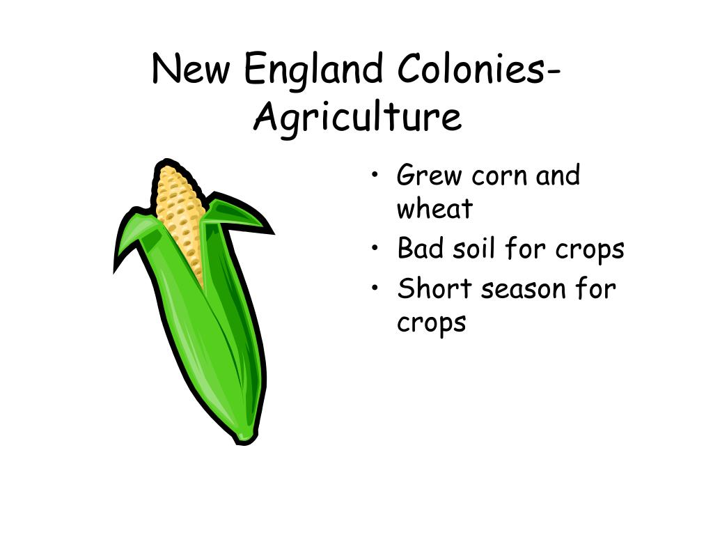 New England Colonies-Agriculture