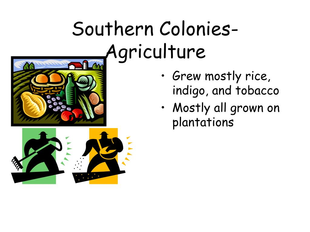 Southern Colonies-Agriculture