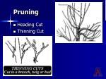 pruning22