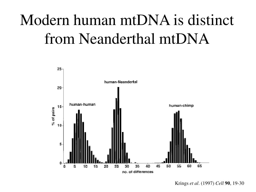 Modern human mtDNA is distinct from Neanderthal mtDNA