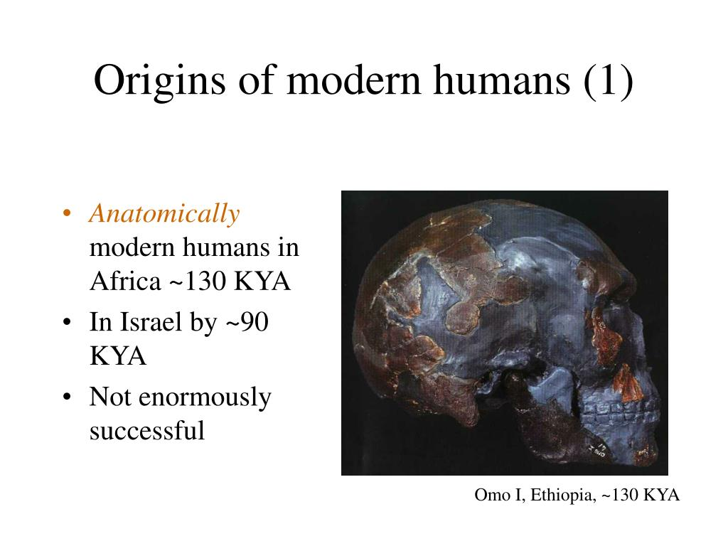 Origins of modern humans (1)