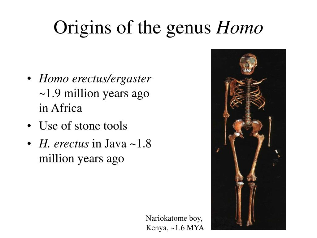 Origins of the genus