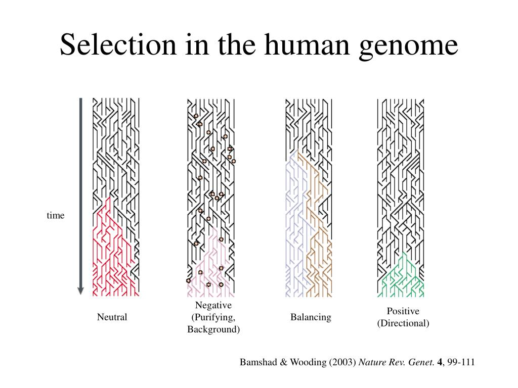 Selection in the human genome