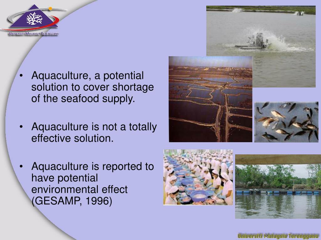 Aquaculture, a potential solution to cover shortage of the seafood supply.