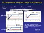 erk phosphorylation in response to single and double ligands