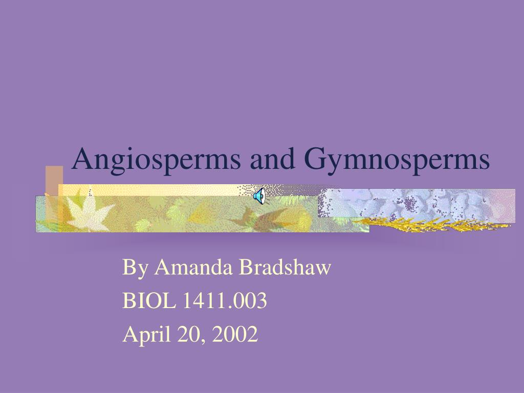 angiosperms and gymnosperms l.