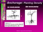 anchorage planting density