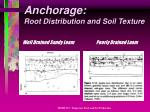 anchorage root distribution and soil texture