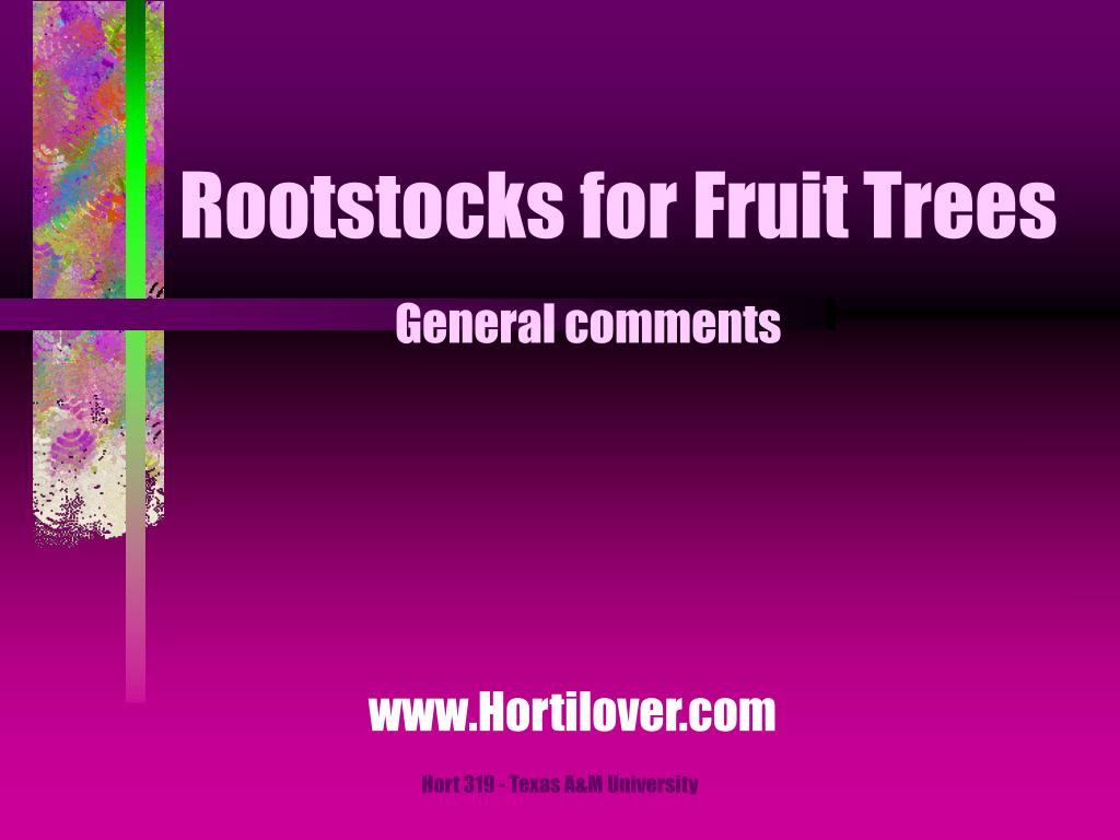 rootstocks for fruit trees l.