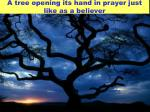 a tree opening its hand in prayer just like as a believer