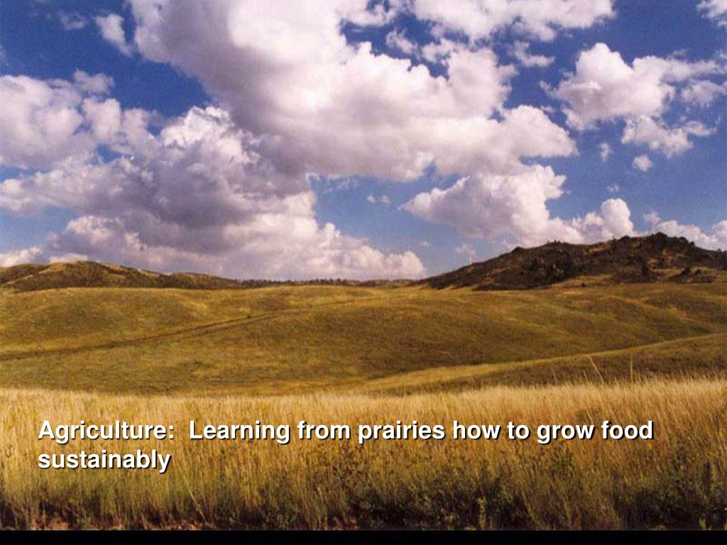 Agriculture:  Learning from prairies how to grow food sustainably