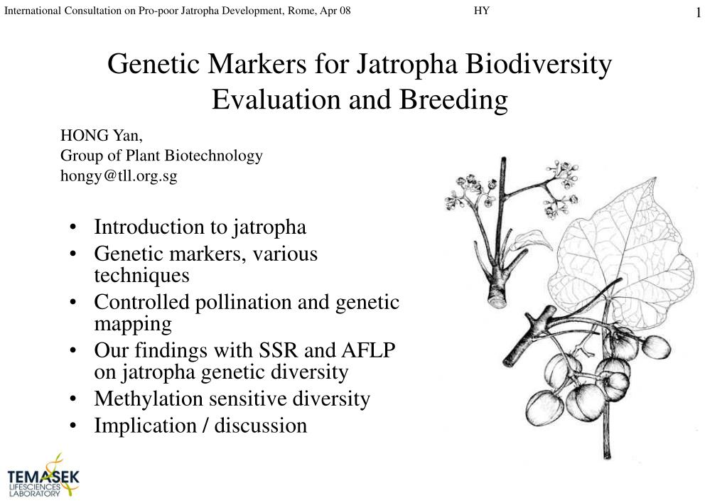 genetic markers for jatropha biodiversity evaluation and breeding l.