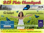dlf plots chandigarh4