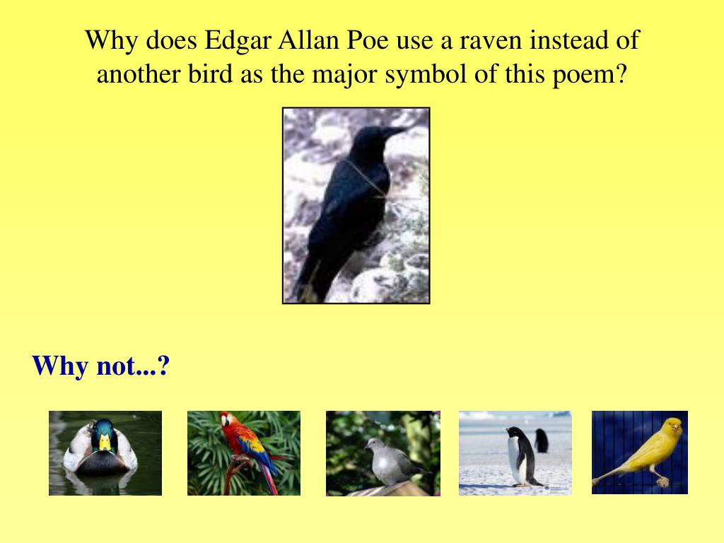Why does Edgar Allan Poe use a raven instead of another bird as the major symbol of this poem?