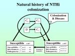 natural history of nthi colonization