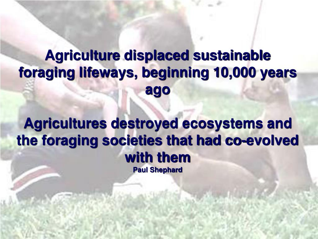 Agriculture displaced sustainable foraging lifeways, beginning 10,000 years ago