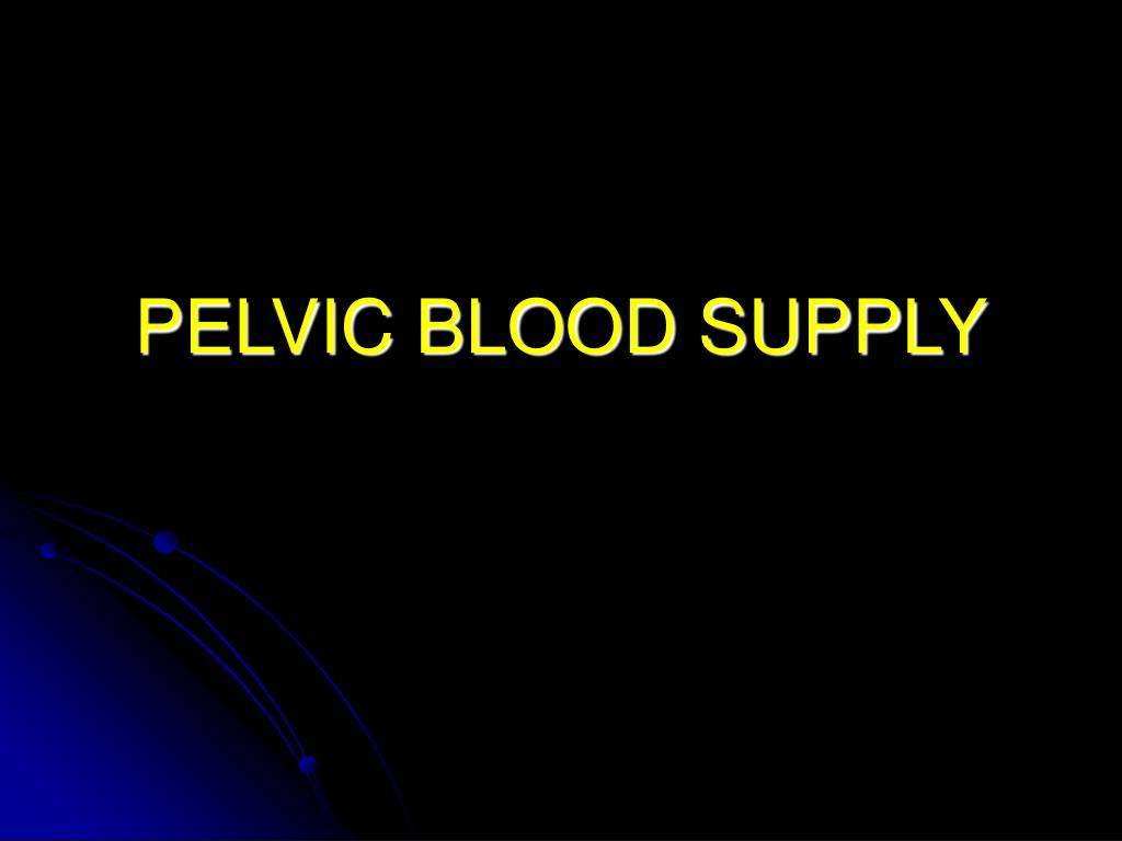 pelvic blood supply l.