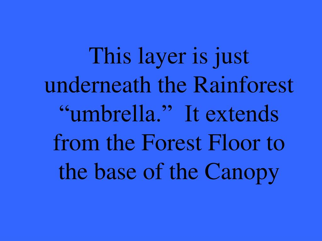 "This layer is just underneath the Rainforest ""umbrella.""  It extends from the Forest Floor to the base of the Canopy"