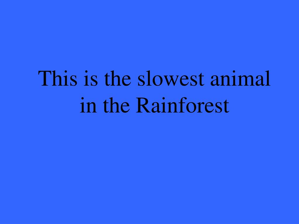 This is the slowest animal in the Rainforest