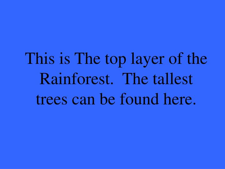 This is the top layer of the rainforest the tallest trees can be found here