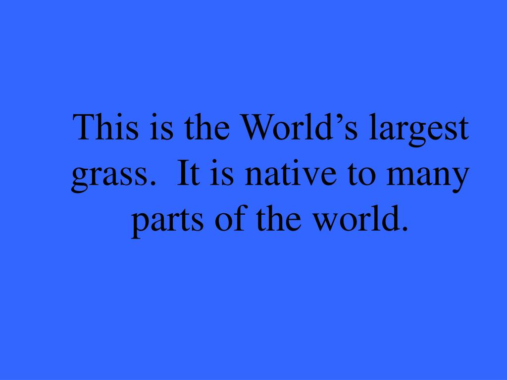 This is the World's largest grass.  It is native to many parts of the world.