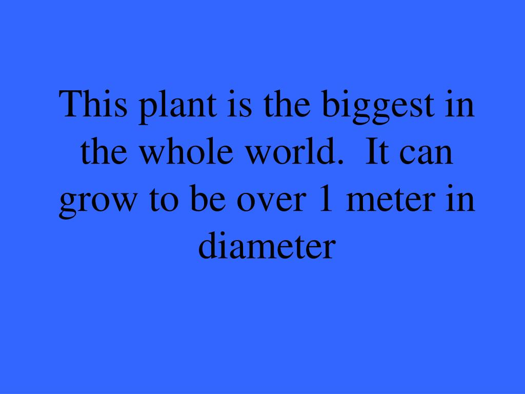 This plant is the biggest in the whole world.  It can grow to be over 1 meter in diameter