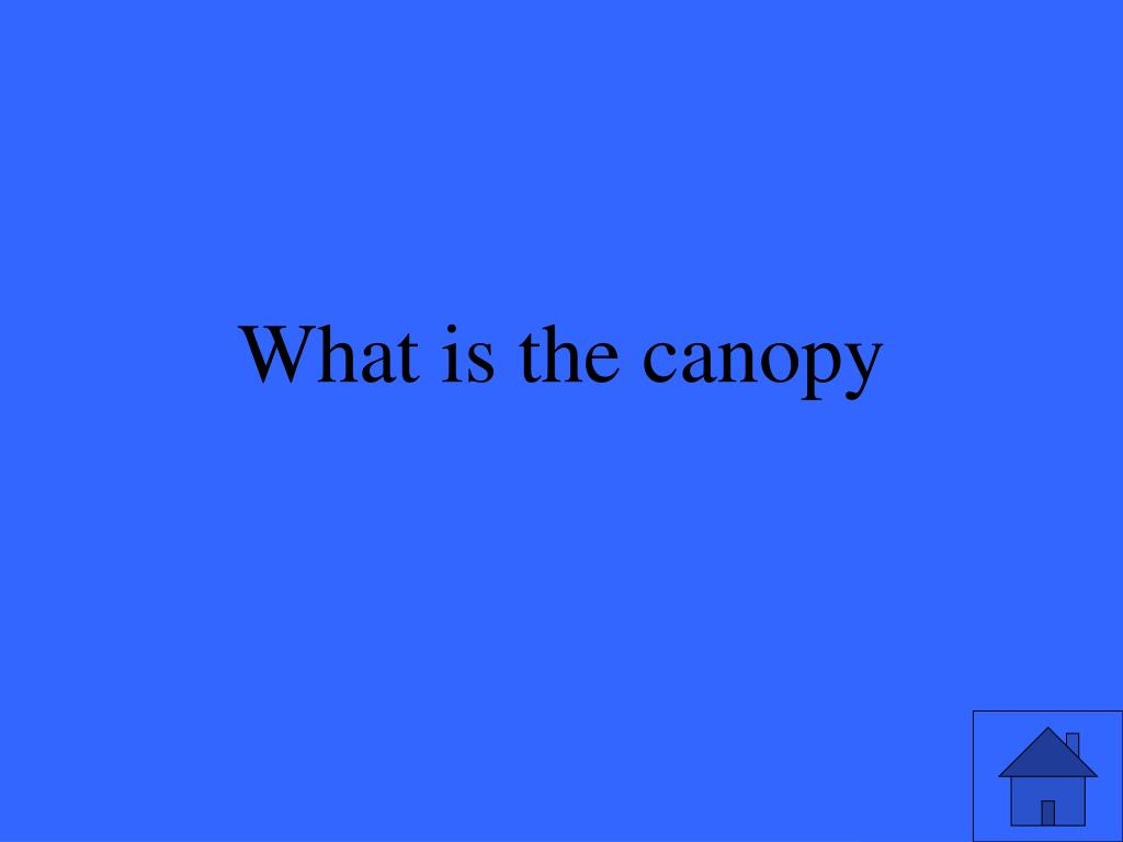 What is the canopy
