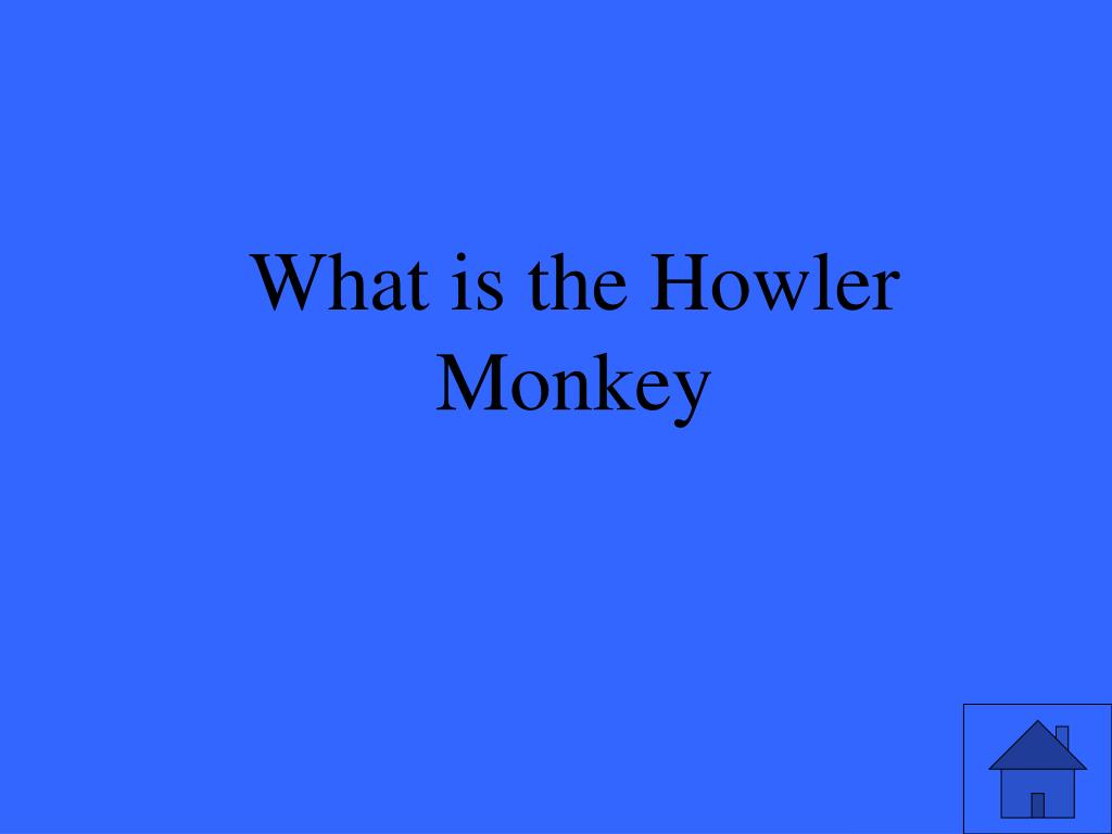 What is the Howler Monkey