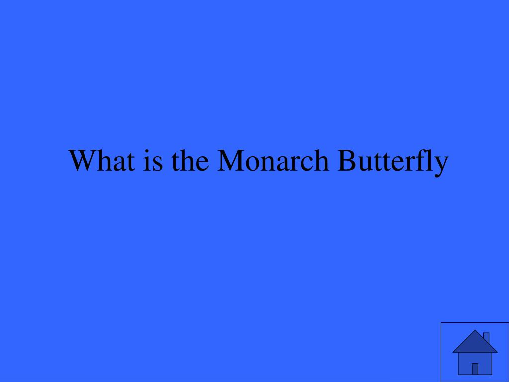 What is the Monarch Butterfly