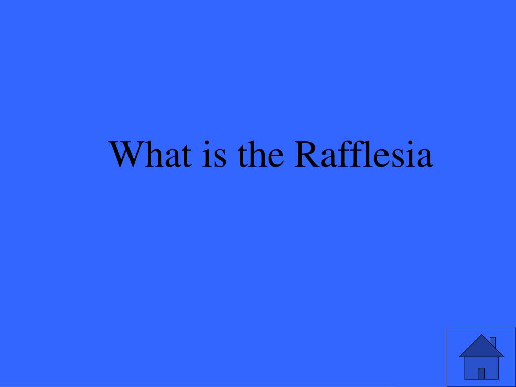 What is the Rafflesia