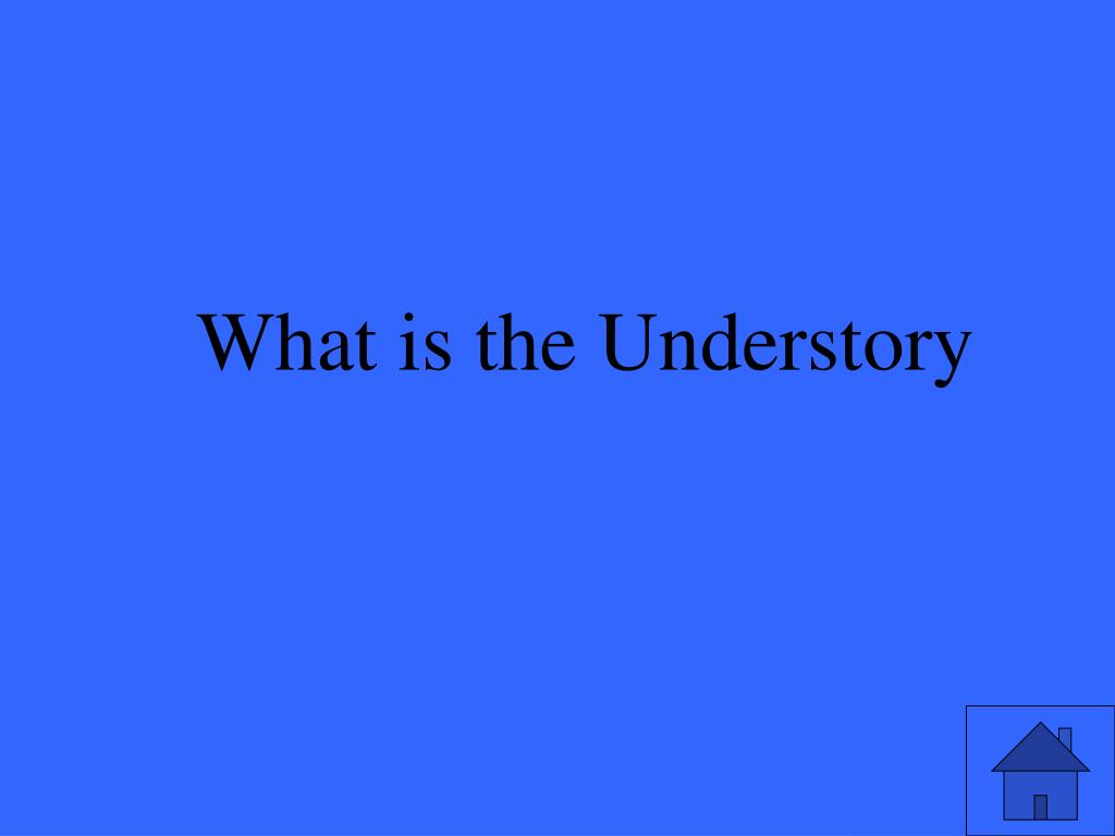 What is the Understory