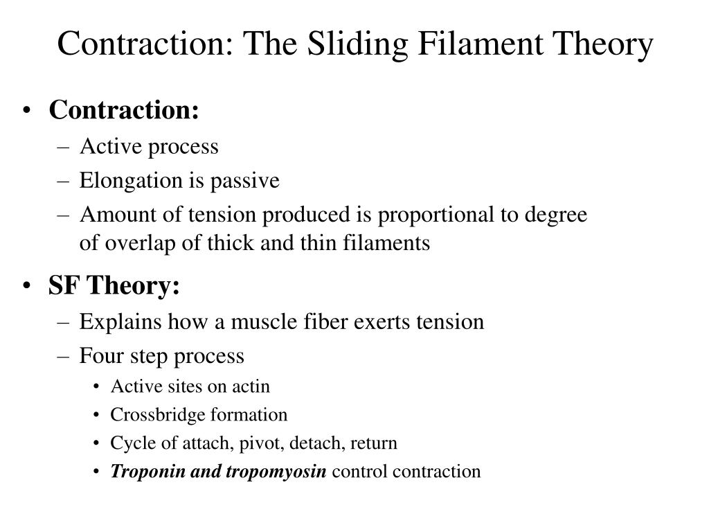 Contraction: The Sliding Filament Theory