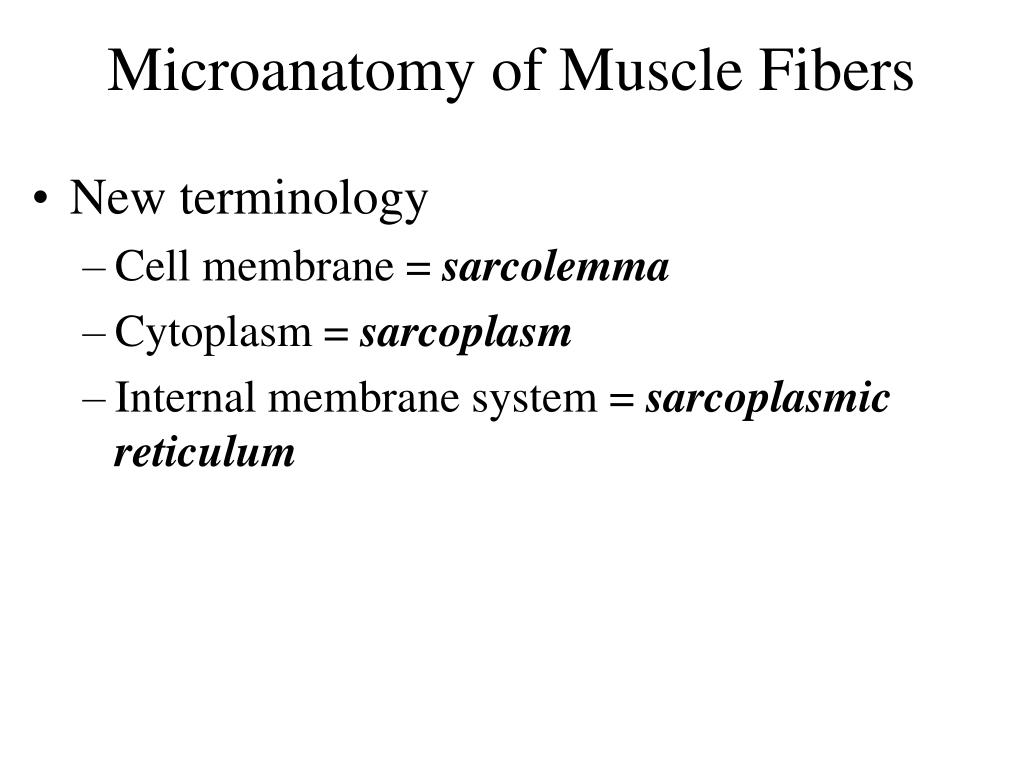 Microanatomy of Muscle Fibers