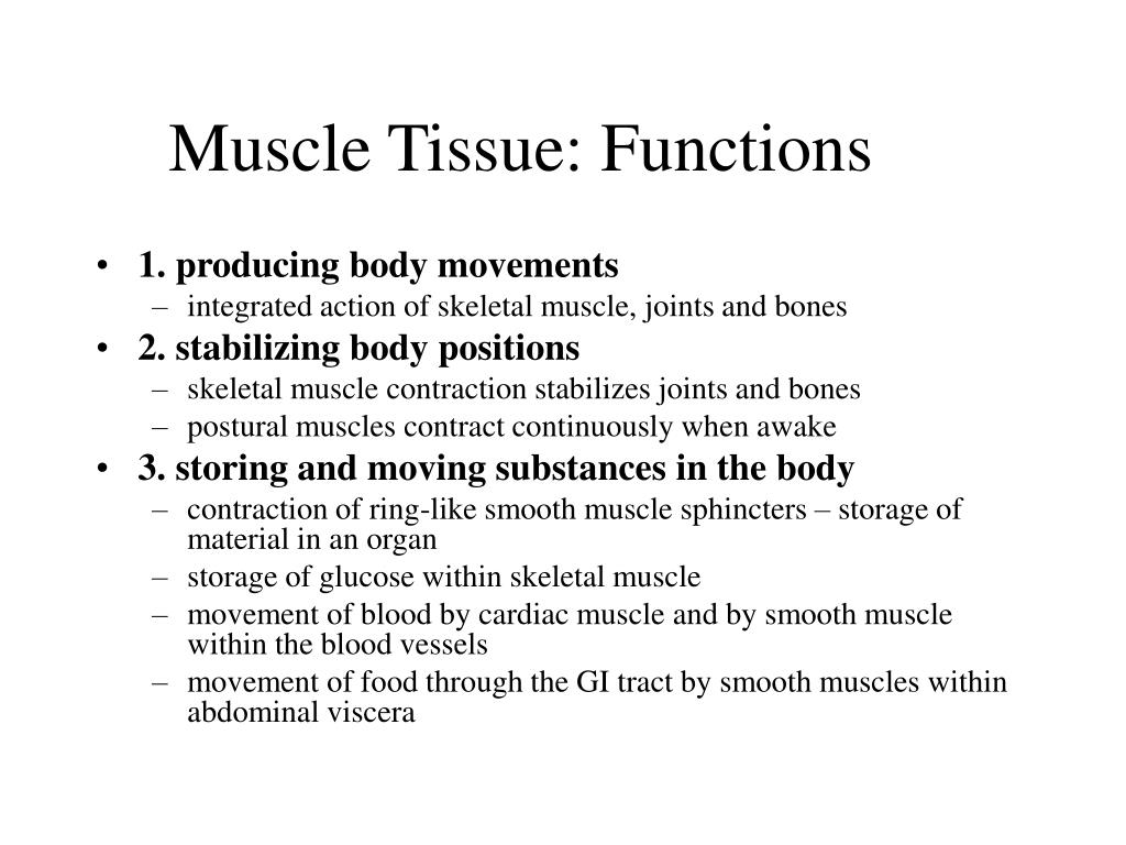 Muscle Tissue: Functions
