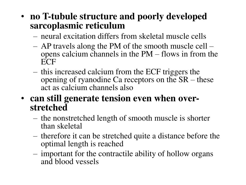 no T-tubule structure and poorly developed sarcoplasmic reticulum