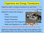 organisms are energy transducers6