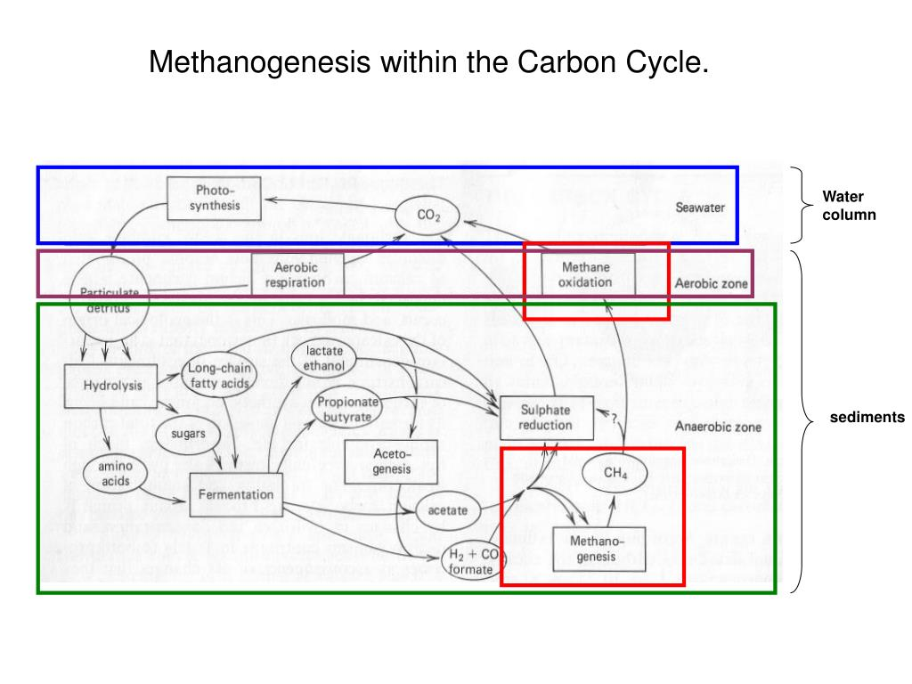 Methanogenesis within the Carbon Cycle.