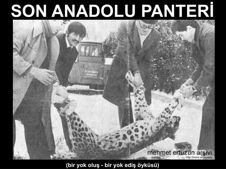 SON ANADOLU PANTERİ