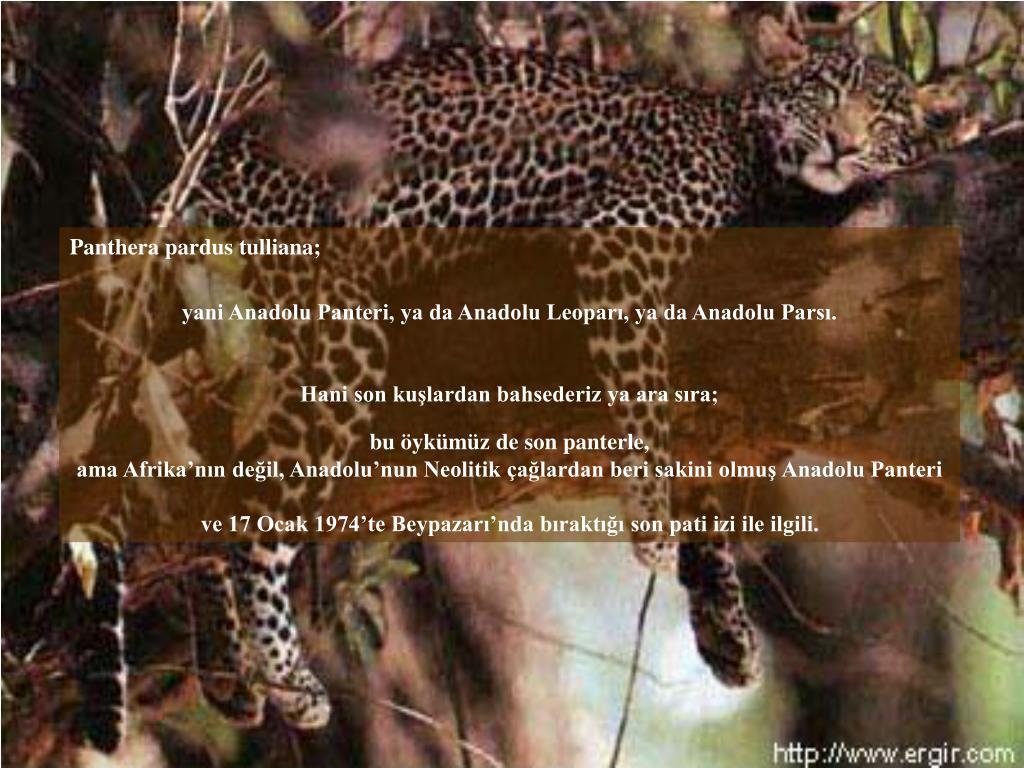 Panthera pardus tulliana;