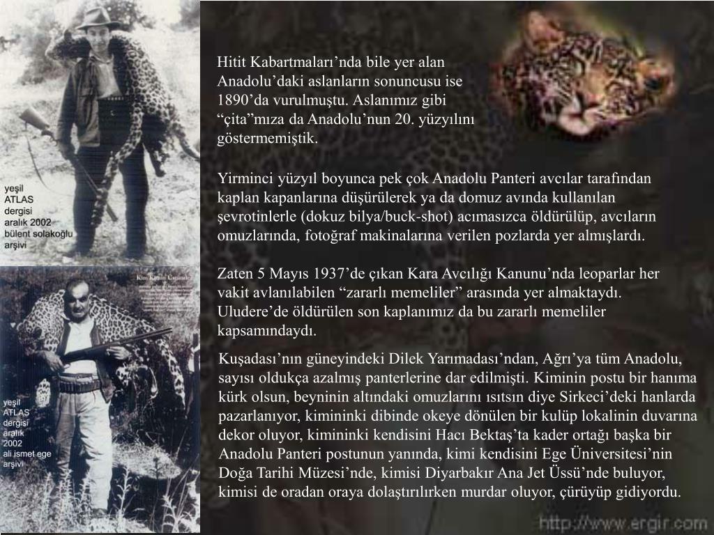 """Hitit Kabartmaları'nda bile yer alan Anadolu'daki aslanların sonuncusu ise 1890'da vurulmuştu. Aslanımız gibi """"çita""""mıza da Anadolu'nun 20. yüzyılını göstermemiştik."""