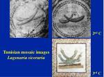 tunisian mosaic images lagenaria siceraria