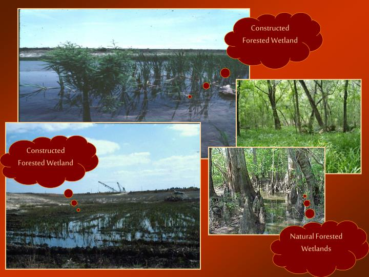 Constructed Forested Wetland