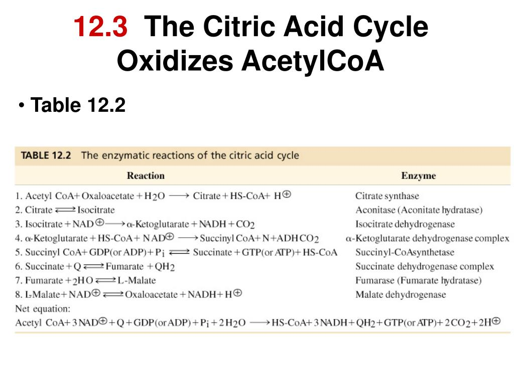 12 3 the citric acid cycle oxidizes acetylcoa l.