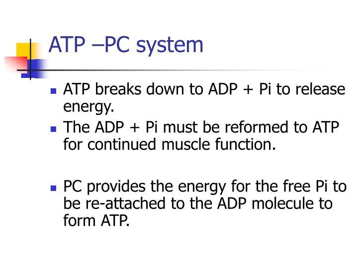 ATP –PC system