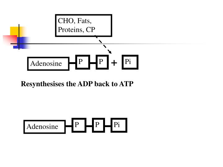 CHO, Fats, Proteins, CP