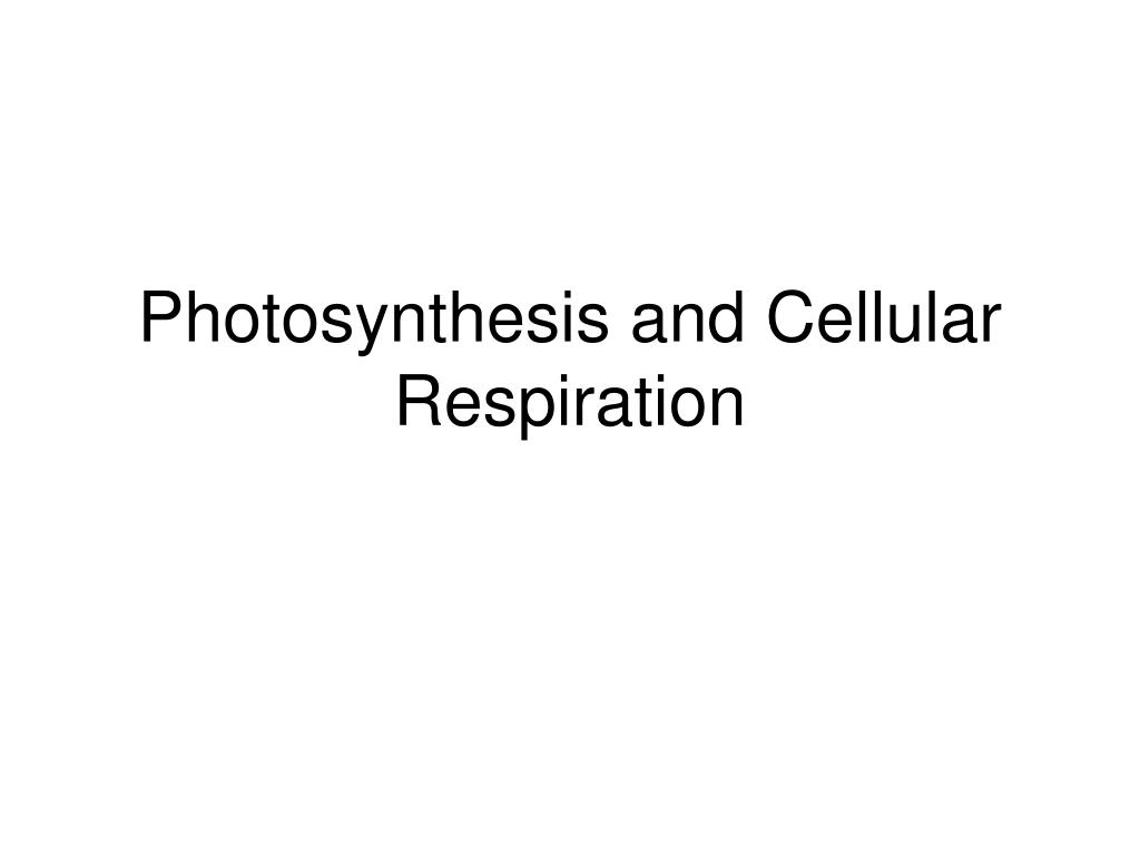 photosynthesis and cellular respiration l.