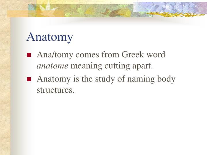 Ppt Medical Terminology Powerpoint Presentation Id162176