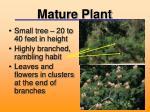 mature plant1